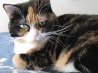Meet Bella - Another Success Story at Care Animal Hospital