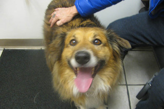 Happy dog at care animal hospital in arvada co