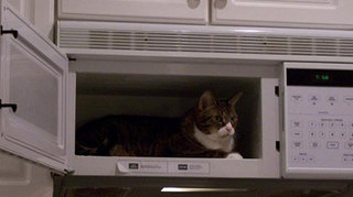 Cat in microwave
