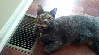 Cat laying by the vent