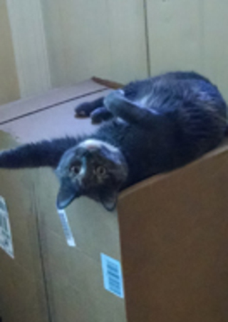 Cat on moving box