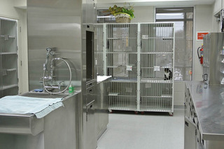 Surgical area at our animal hospital in arlington va