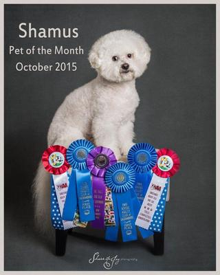Shamus pom october