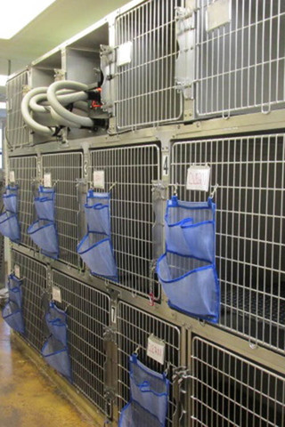 Indoor kennel at our veterinary hospital in niceville fl