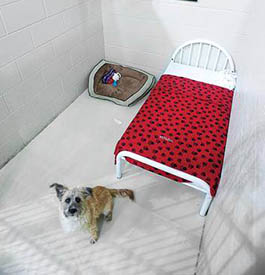 Boarding daily schedule at PetSuites Pet Resort & Spa