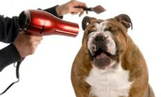 Petsuites dog being blowdried