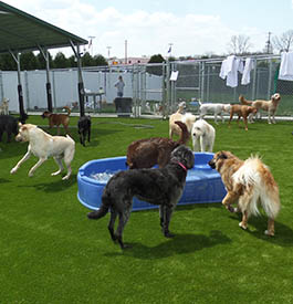 Pet daycare at PetSuites Pet Resort & Spa