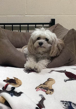 Dog comfortable in his bed at PetSuites Pet Resort & Spa