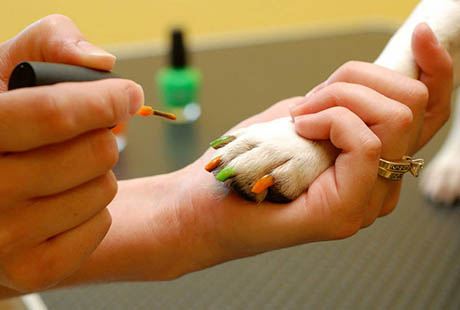 Spa services available at PetSuites Pet Resort & Spa