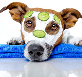 Your pets will enjoy the salon experience at  in Roswell, GA
