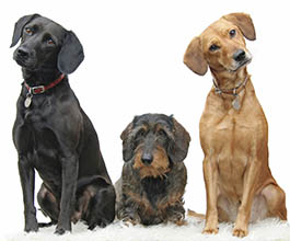 Frequently asked questions about PetSuites of America
