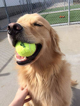Daycare expectations at PetSuites Pet Resort & Spa