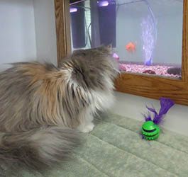 Feline boarding accommodations at PetSuites of America