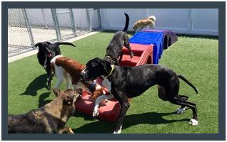Pet daycare in Roswell