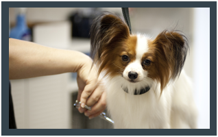 Pet grooming in Dayton