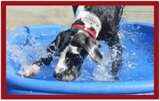 View our photo gallery PetSuites of America