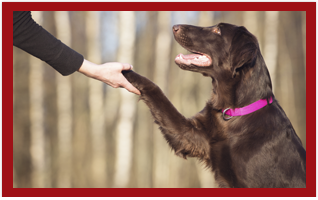 Loyalty program at PetSuites of America