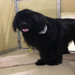 Thumb-petsuites-indianapolis-fishers-boarding-03
