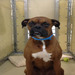 Thumb-petsuites-indianapolis-fishers-boarding-08