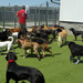 Thumb-petsuites-indianapolis-fishers-experience-04