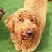 Thumb-petsuites-roswell-grooming-06
