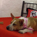 Thumb-petsuites-roswell-experience-05