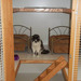 Thumb-petsuites-roswell-experience-10