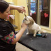 Thumb-petsuites-sharonville-grooming-07