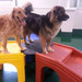 Thumb-petsuites-lexington-experience-02
