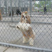 Thumb-petsuites-lexington-experience-03