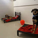 Thumb-petsuites-lexington-experience-06