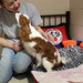 Thumb-petsuites-lexington-experience-10