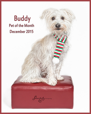 Buddy pom 2015 december