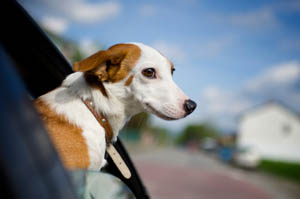 Veterinary Clinic Tucson, AZ Map & Directions