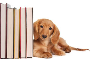 Get educated on your pets needs at Countryside Pet Clinic Andover