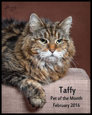 Taffy pom feb 2016