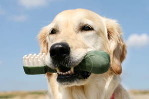 A dog receives preventive pet care in Hillsboro OR