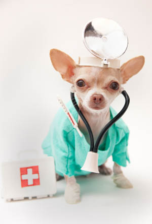 Doctor dog primary pet care in Evansville