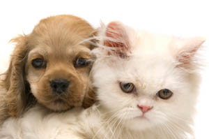 Specialized puppy & kitten care at Westside Pet Hospital and Boarding Redding