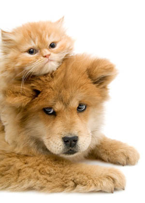Special offers at Family Pet Clinic of Grapevine