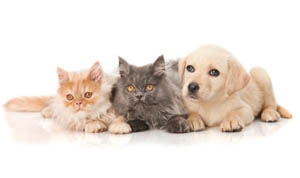 About West Hills Animal Hospital in West Hills