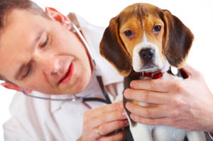 Veterinarians in Rochester Hills.