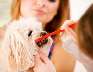 Pet dental care at Clocktower Animal Hospital