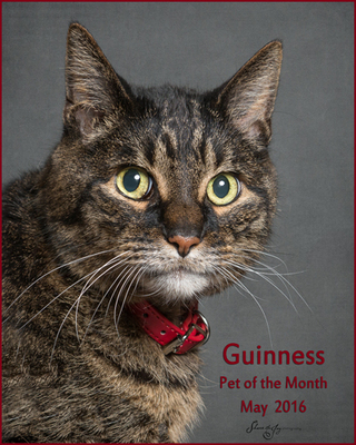 Guinness may 2016