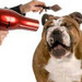 Thumb-petsuites_zionsville-blow-drying