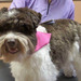 Thumb-petsuites_zionsville-dog-with-pink-scarf