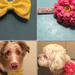 Thumb-petsuites_zionsville-grooming