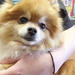 Thumb-petsuites_zionsville-grooming-dogs