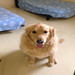 Thumb-petsuites_zionsville-boarding