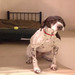 Thumb-petsuites_zionsville-boarding-dogs